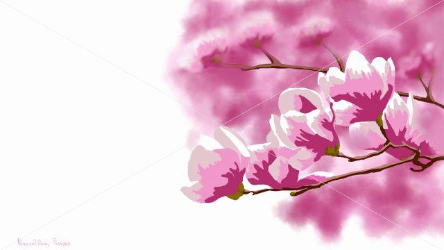 obrázek magnolie